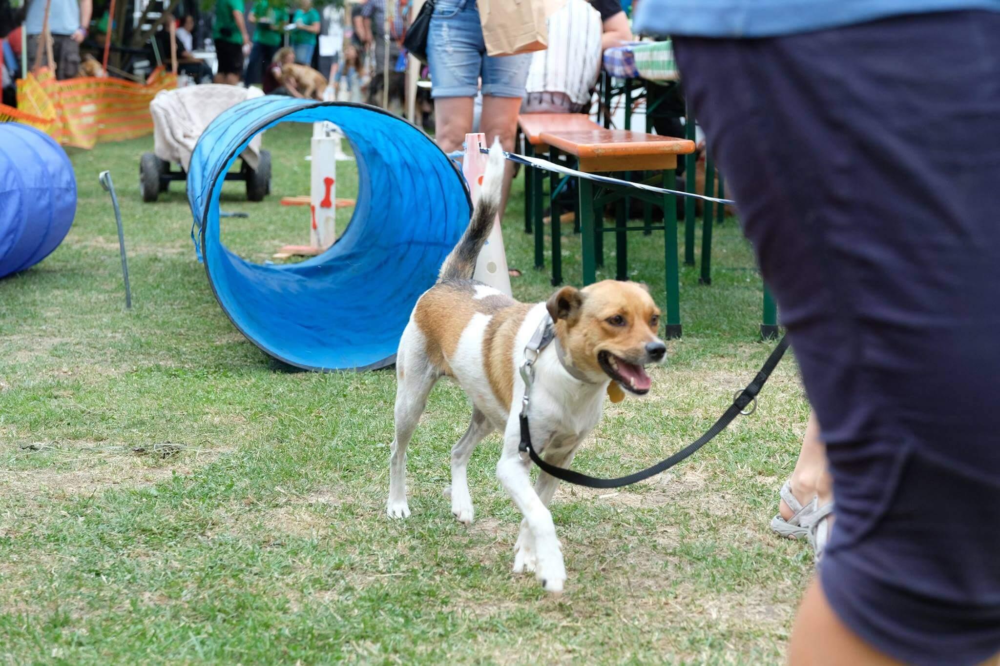 Kurzinterview mit der Frei Schnauze Hundeschule